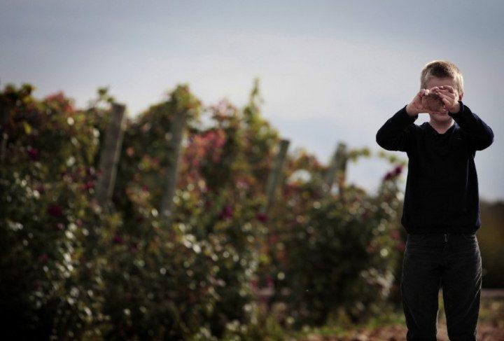 Vivanco Kids-Programa Educ Infantil en Cultura de Vino