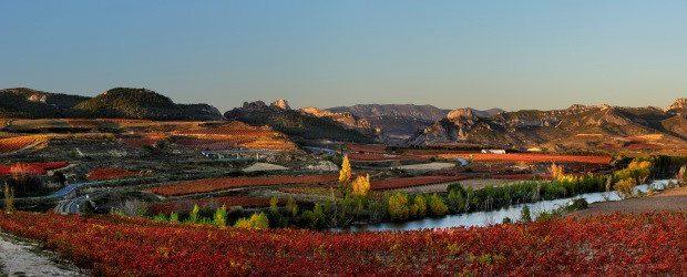 Viñas en otoño, Rioja Alta, DOC Rioja, Haro, la Rioja