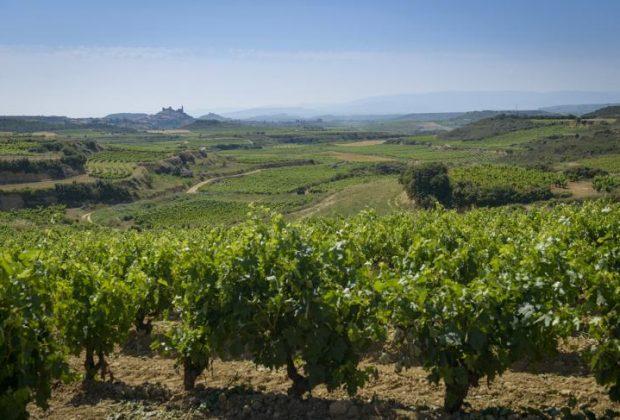 Rioja-LabasRioja