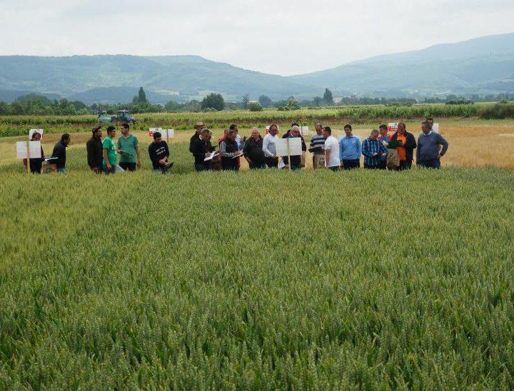 campo experimental cereales Tricio