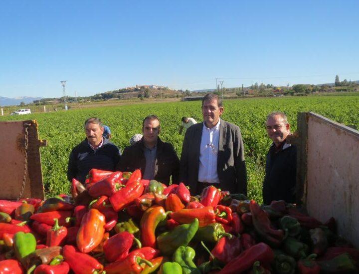 El Festival del Pimiento Riojano cumple diez años